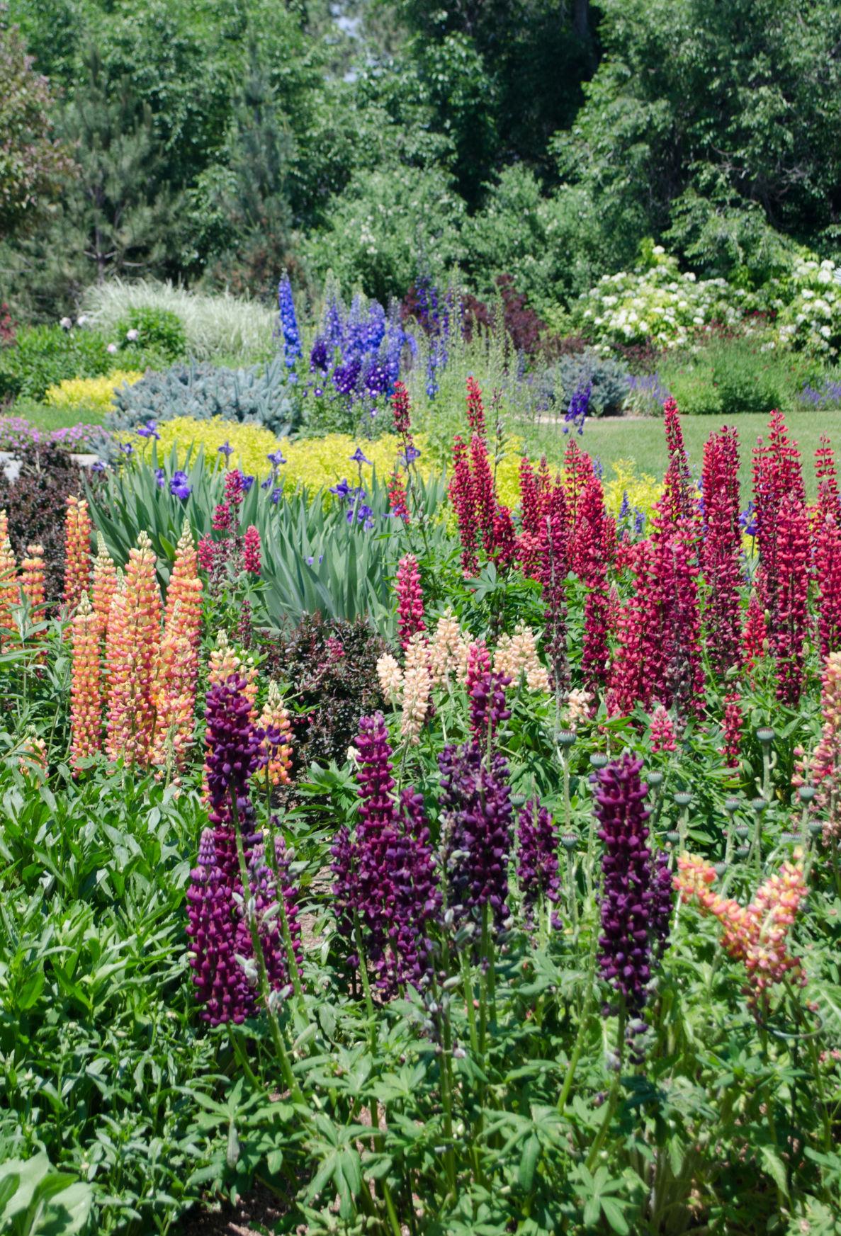 FOX Tour To Show Off 7 Broadmoor Area Gardens
