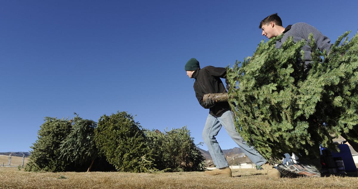 Tree Recycling Dropoff Begins In Colorado Springs Pueblo