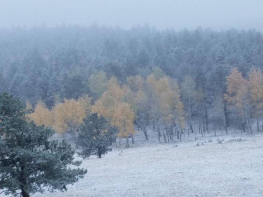 Plant Killing Temperatures And Snow Take Aim At Pikes Peak Region Colorado Springs News Gazette