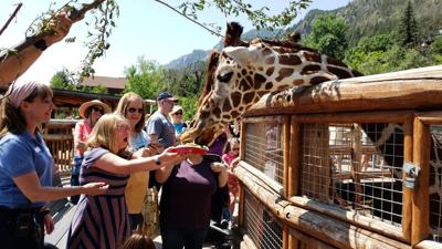 giraffe imposes