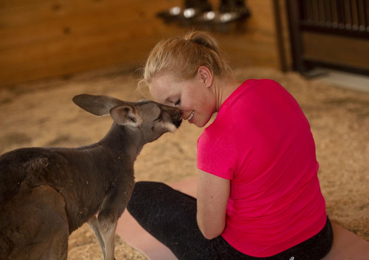 081119-fam-ent-kangaroo-yoga 02