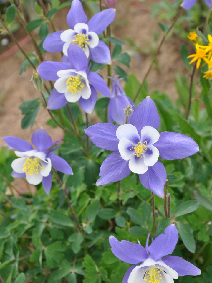 Year Round Gardening Welcome Spring With Some Early Bloomers And