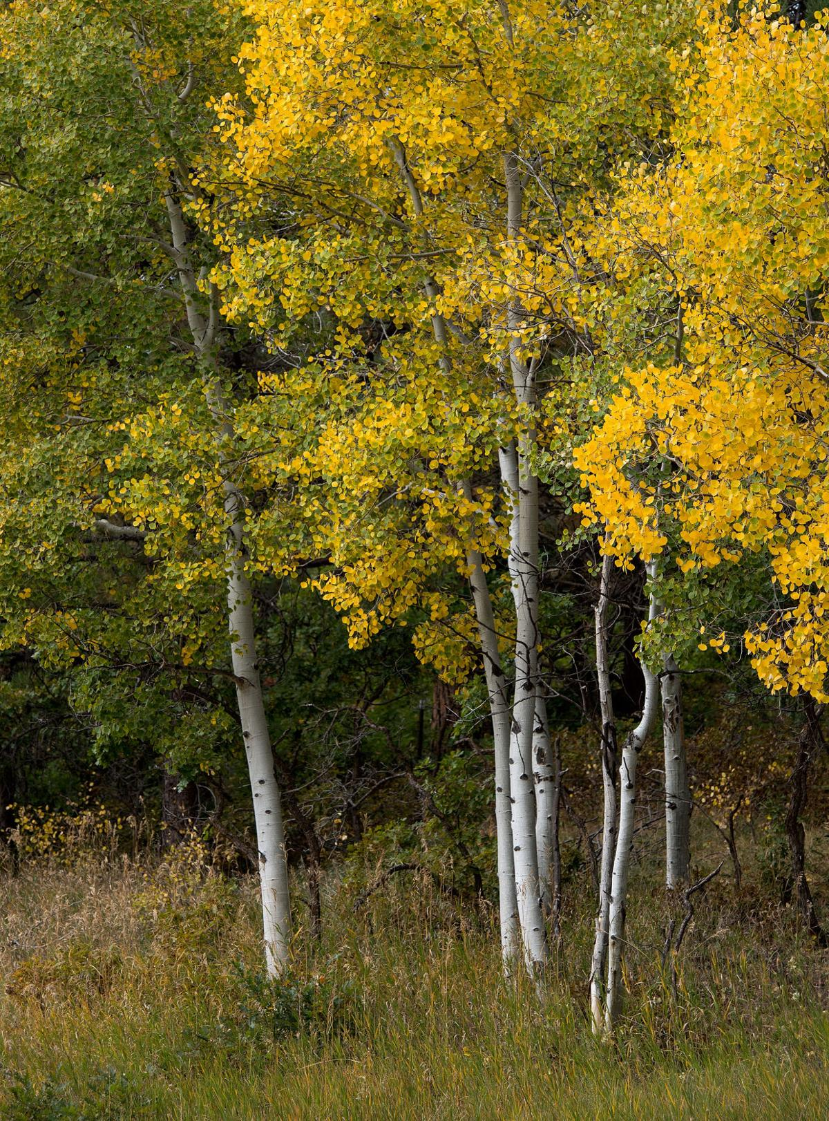 Highway Of Legends Colorado Map.Map 5 Best Places To See Colorado S Fall Colors Lifestyle