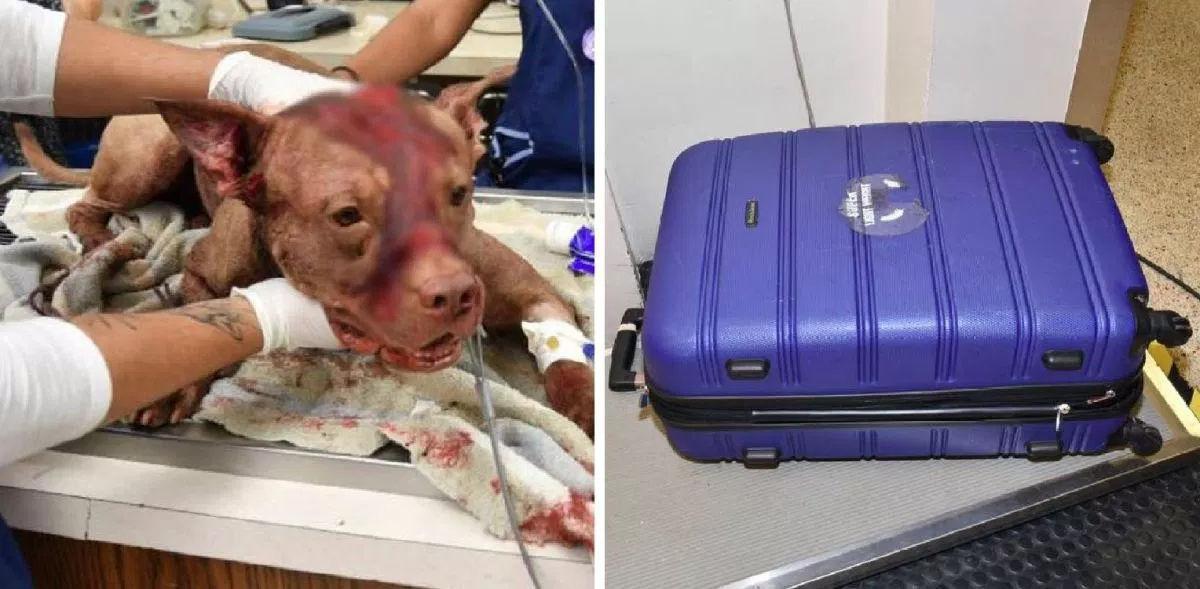 Report: Suspect in dog's
