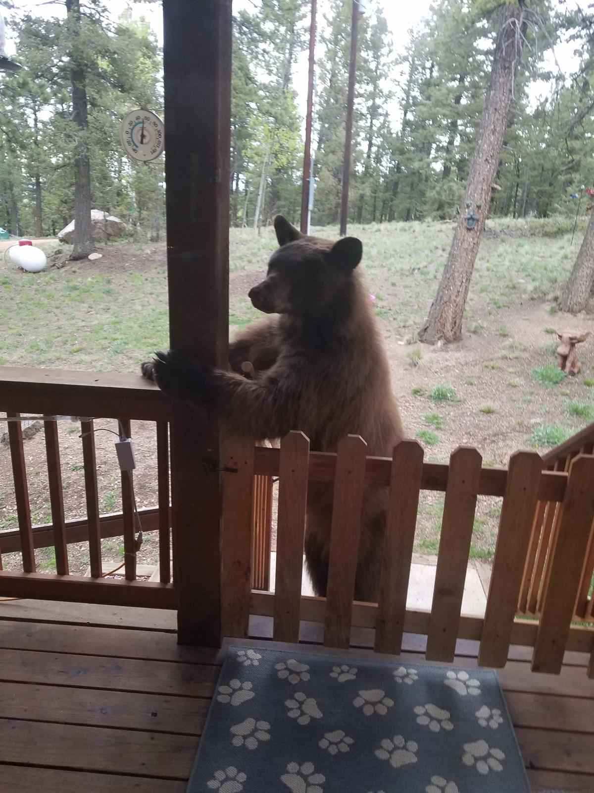 Curious bears snack on sweet nectar