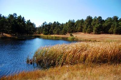 Pineries Pond and Wetlands.JPG (copy)