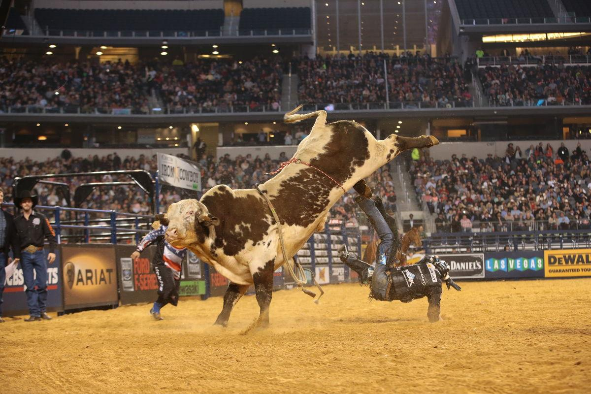 Nathan Schaper attempts to ride Spark-lin Acres/K-C/Blyte Cattle Co.'s Mississippi Hippy during the Arlington Iron Cowboy Built Ford Tough series PBR. Photo by Andy Watson