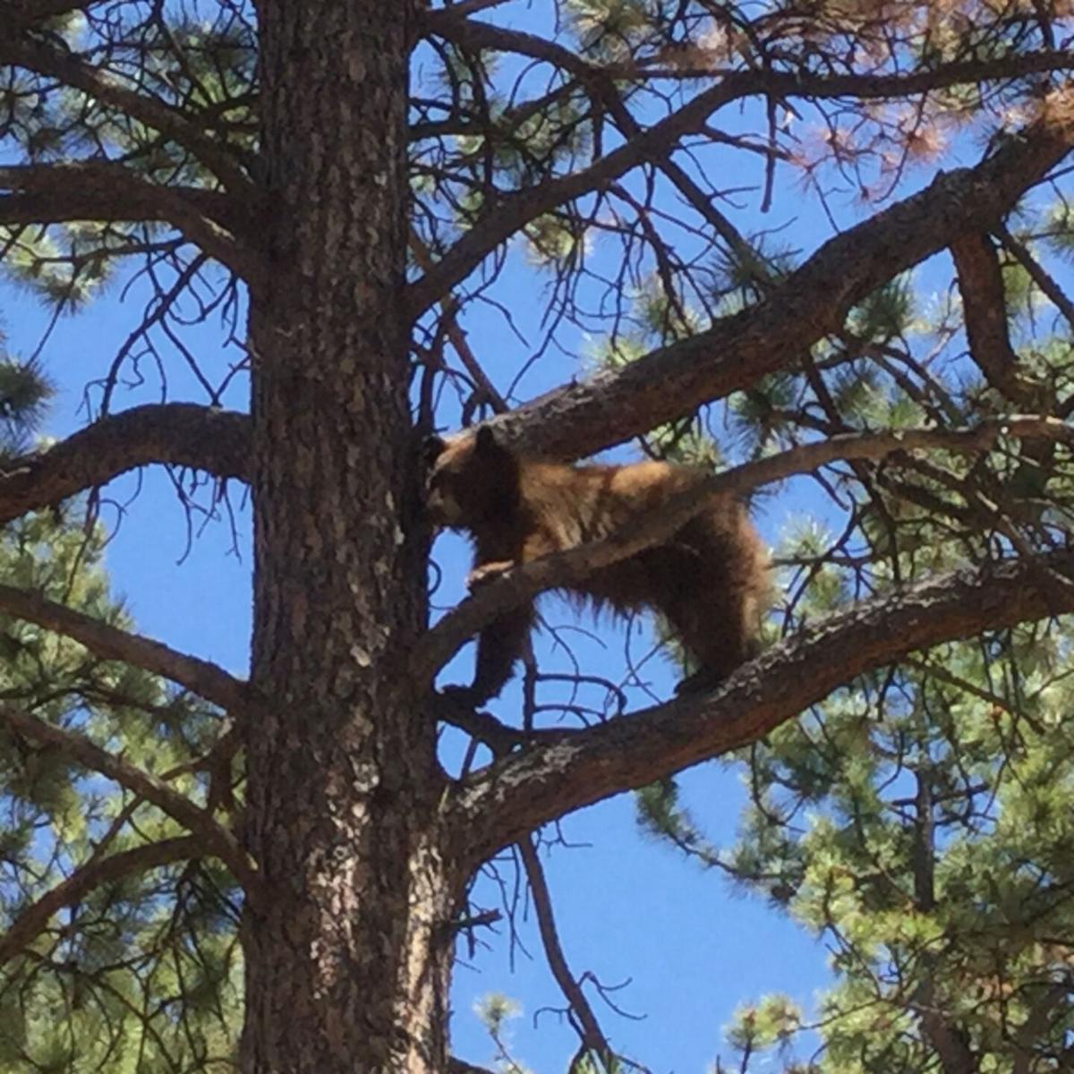 Bears leave hibernation, explore outside world