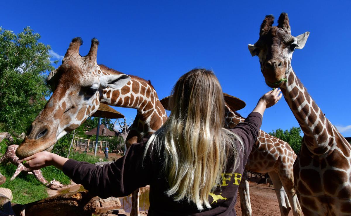071821-life-giraffes 02.JPG