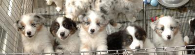 Puppy Line
