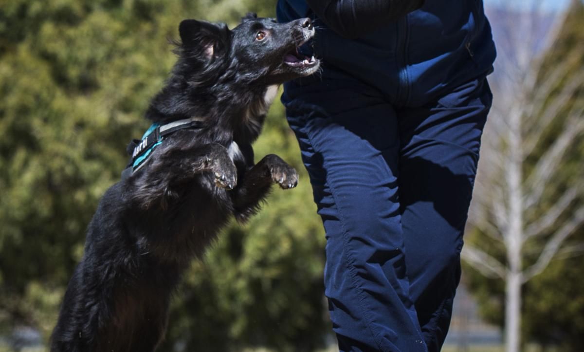 Mary Dougherty works with her rescue dog Marti Wednesday, April 18, 2018, at Memorial Park in Colorado Springs. The two will compete in the 2018 IFCS World Agility Championships in Milan, Italy, April 25 to 29. (The Gazette, Christian Murdock)