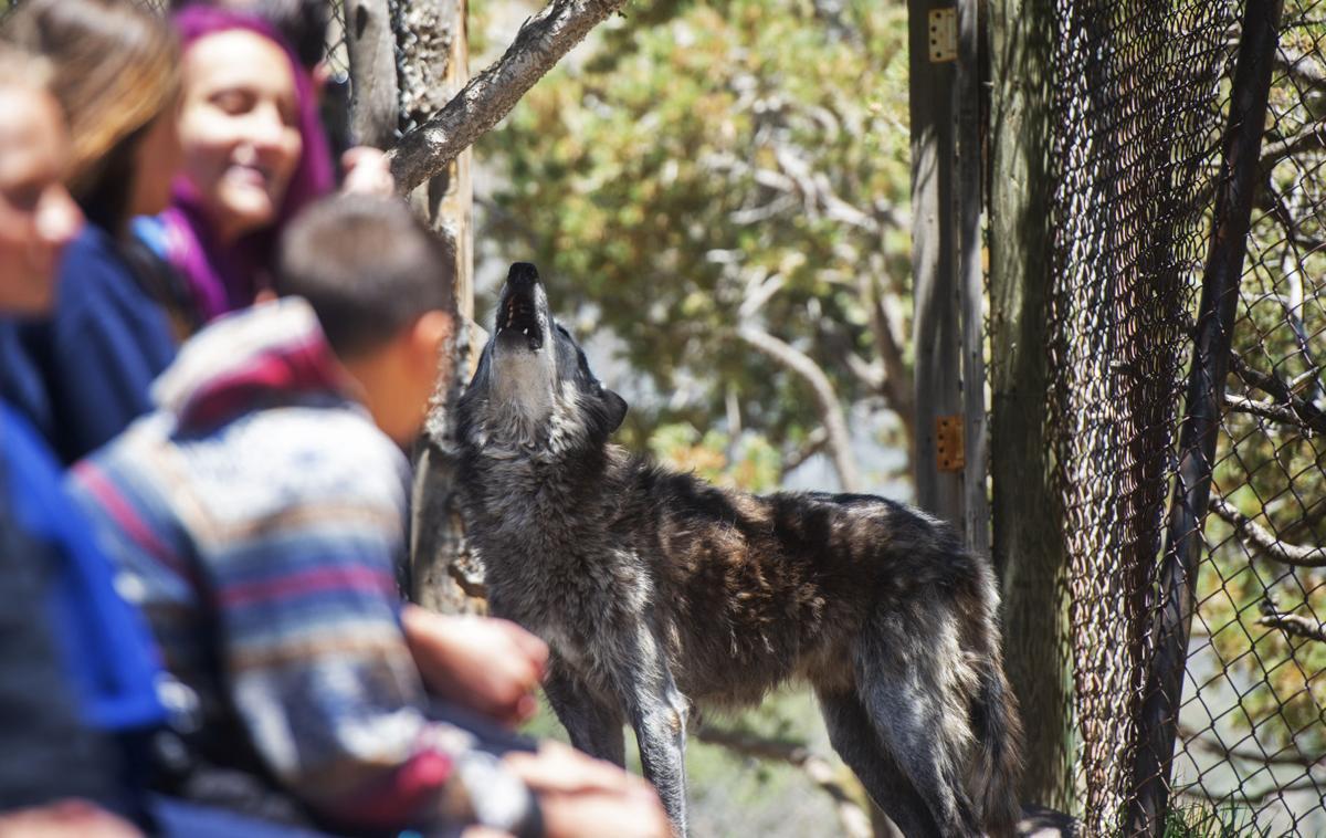 070719-news-wolves 08.JPG