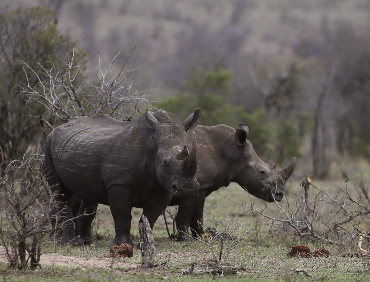 South Africa Saving Species Poachers and Rangers