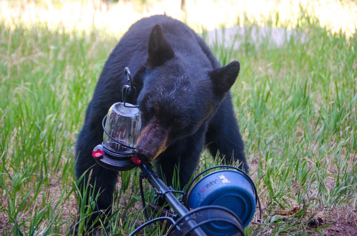 Reader snapshots of Teller County's wildlife, abundant in spring