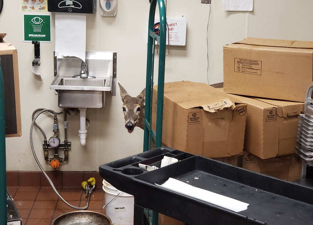 Deer in grocery story