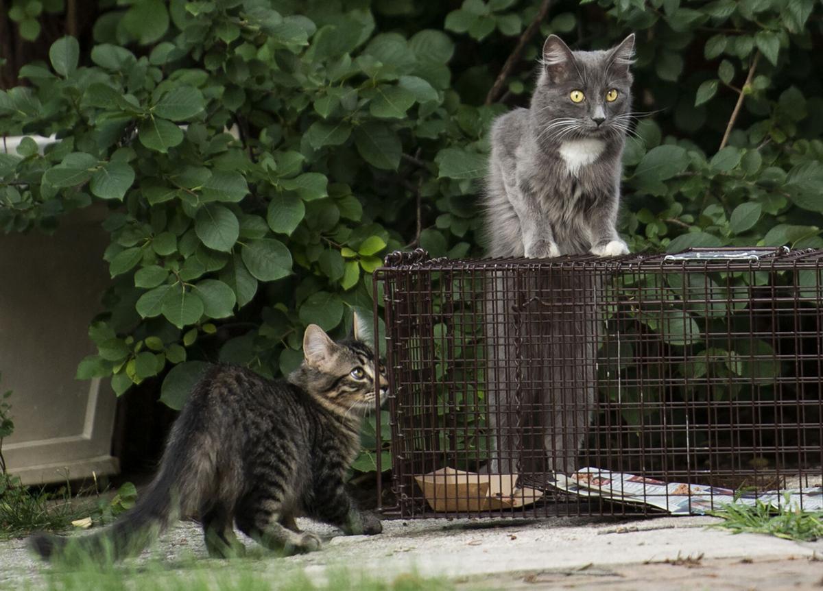 082921-life-cats 08