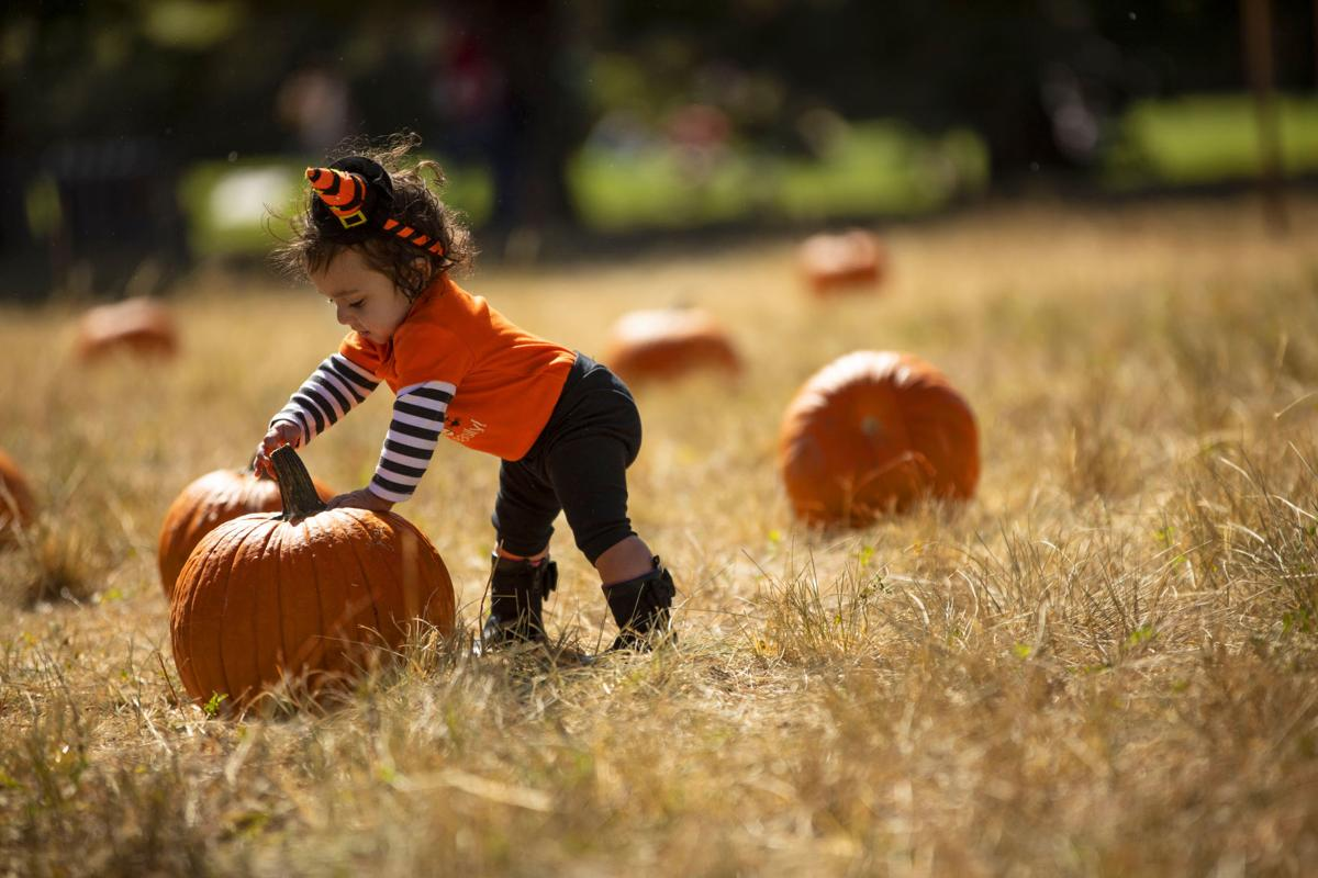 100619-news-pumpkinpatch 02.jpg