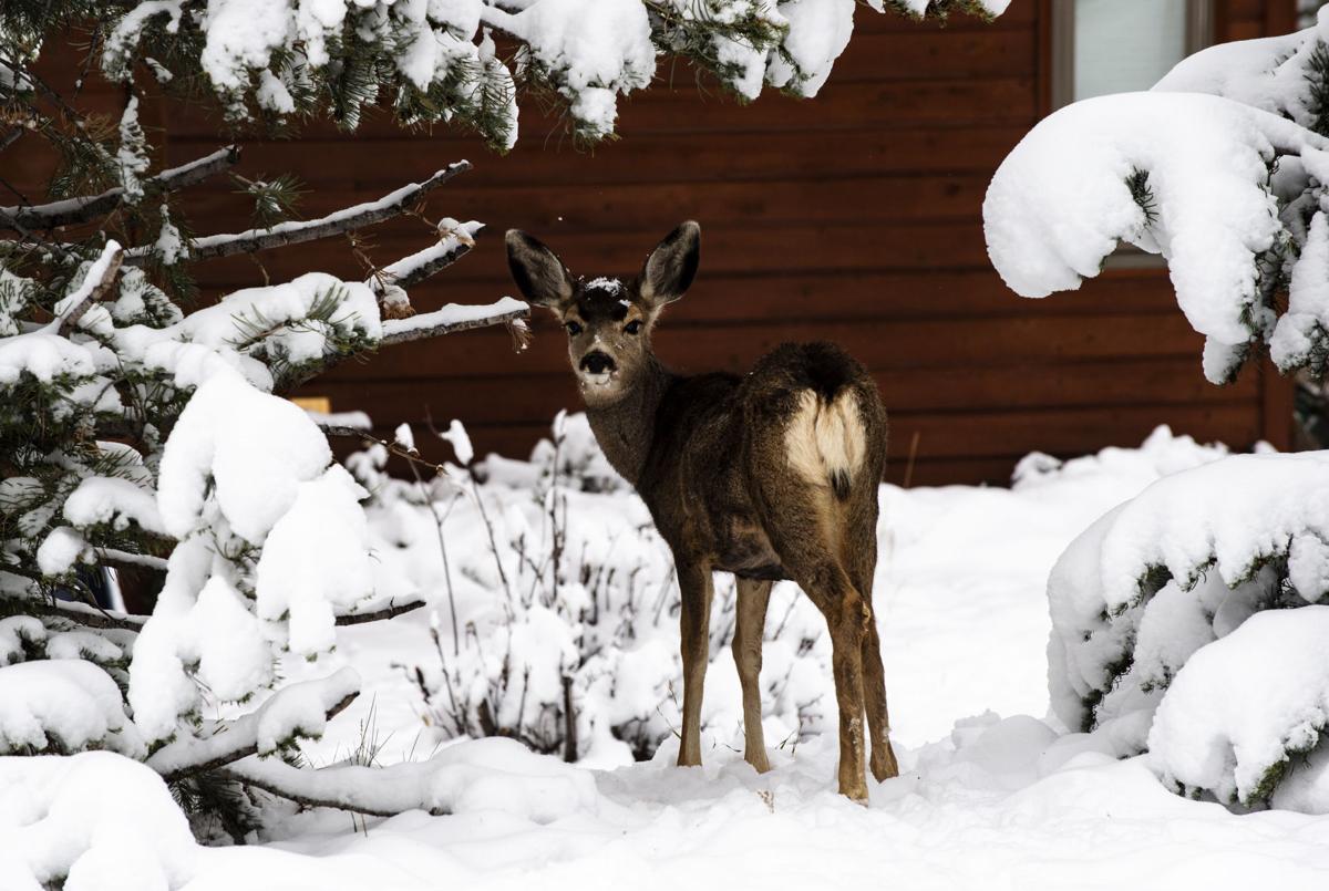 110118-news-snow-0339.jpg (copy)