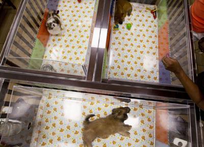 APTOPIX Pet Stores Puppy Mill Law (copy)