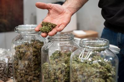 Glass jar full of Cannabis Sativa