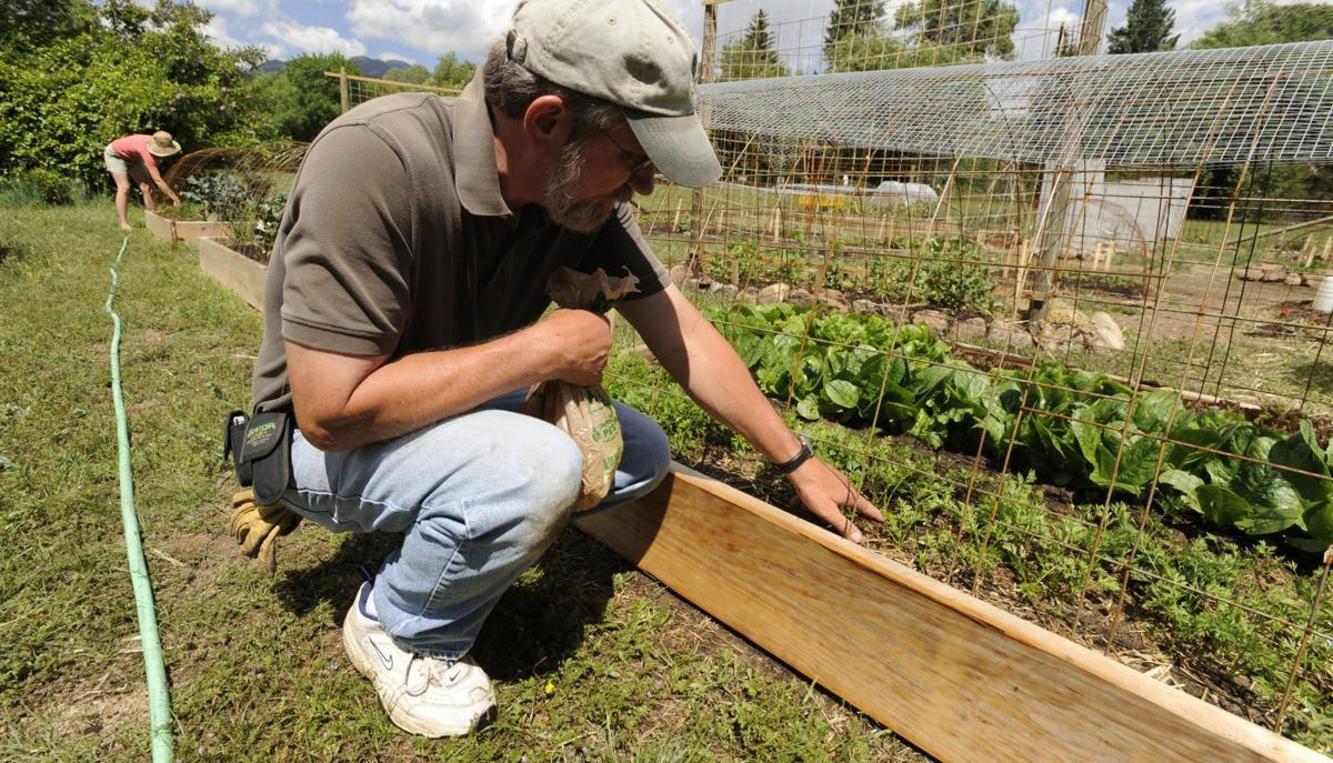 larry stebbins gazette file from PPUG thinning carrots 2014.jpg