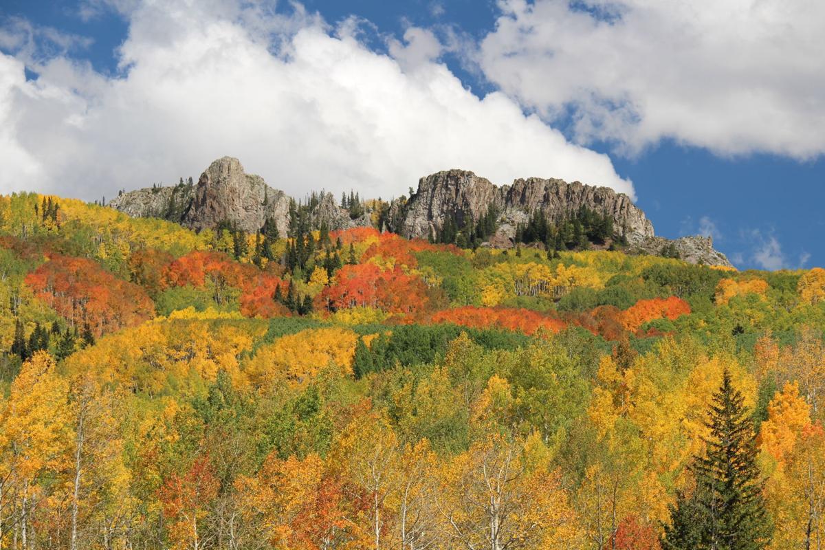 Colorado Fall Colors 2014