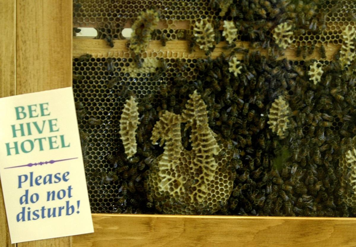 Tuesday, July 2, 2002-photo by Jerilee Bennett-The beehive hotel is one of the most popular displays at the newly built Bear Creek Nature Center.