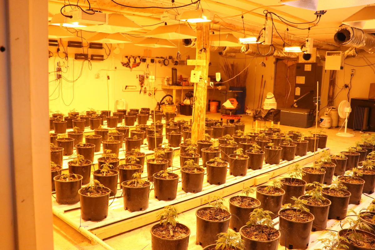 wide shot of growhouse with MJ plants.JPG