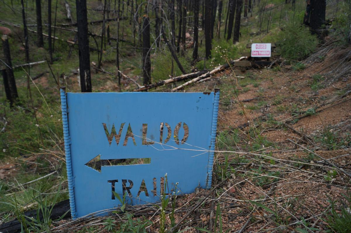 Fire Ecology: Waldo Trail