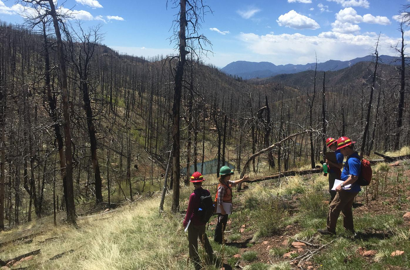 Fire Ecology: Staffers