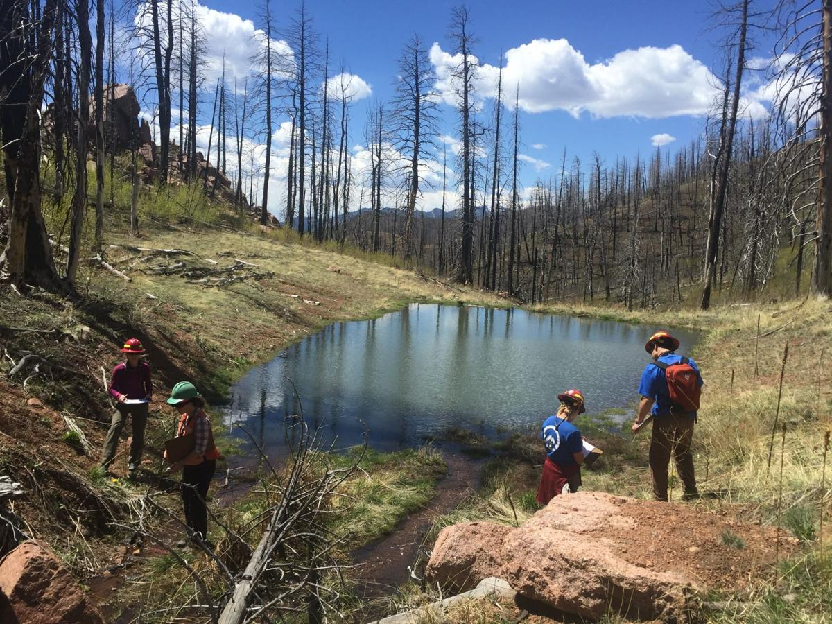 Fire Ecology: Staffers2