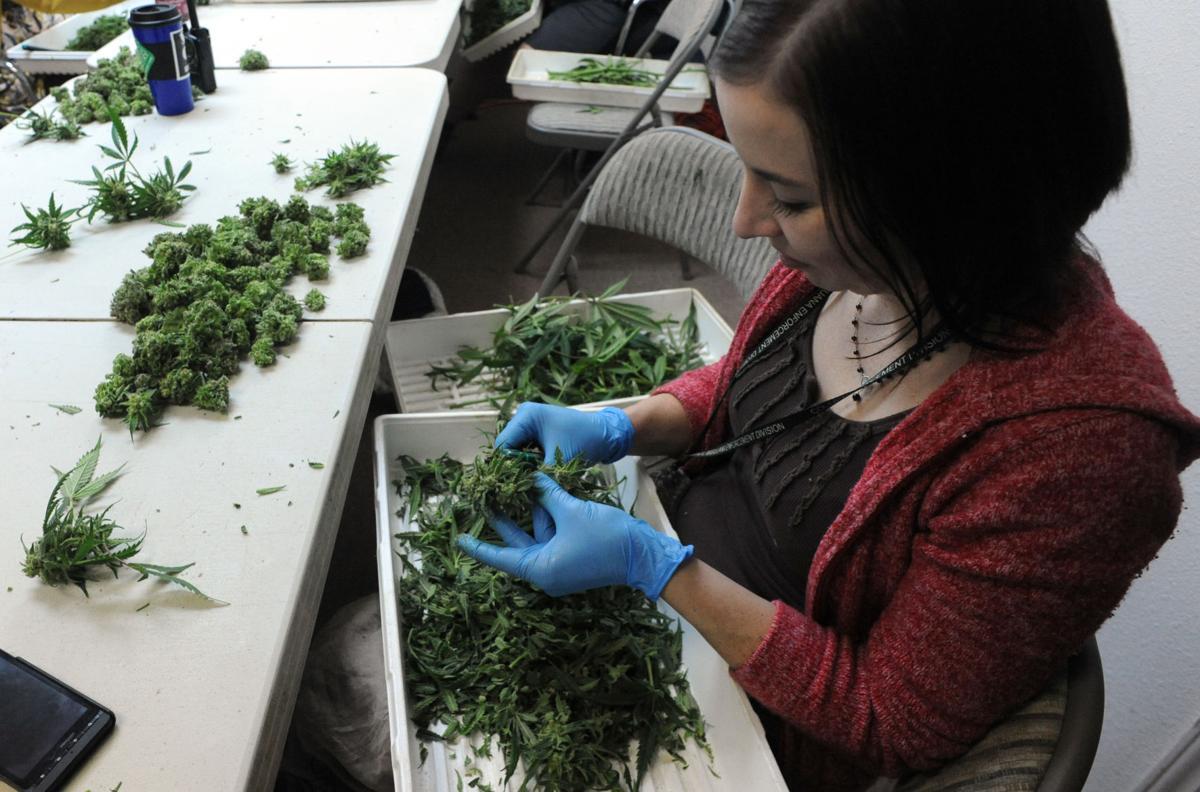 Colorado Springs City Council weighs extension of moratorium on medical marijuana businesses