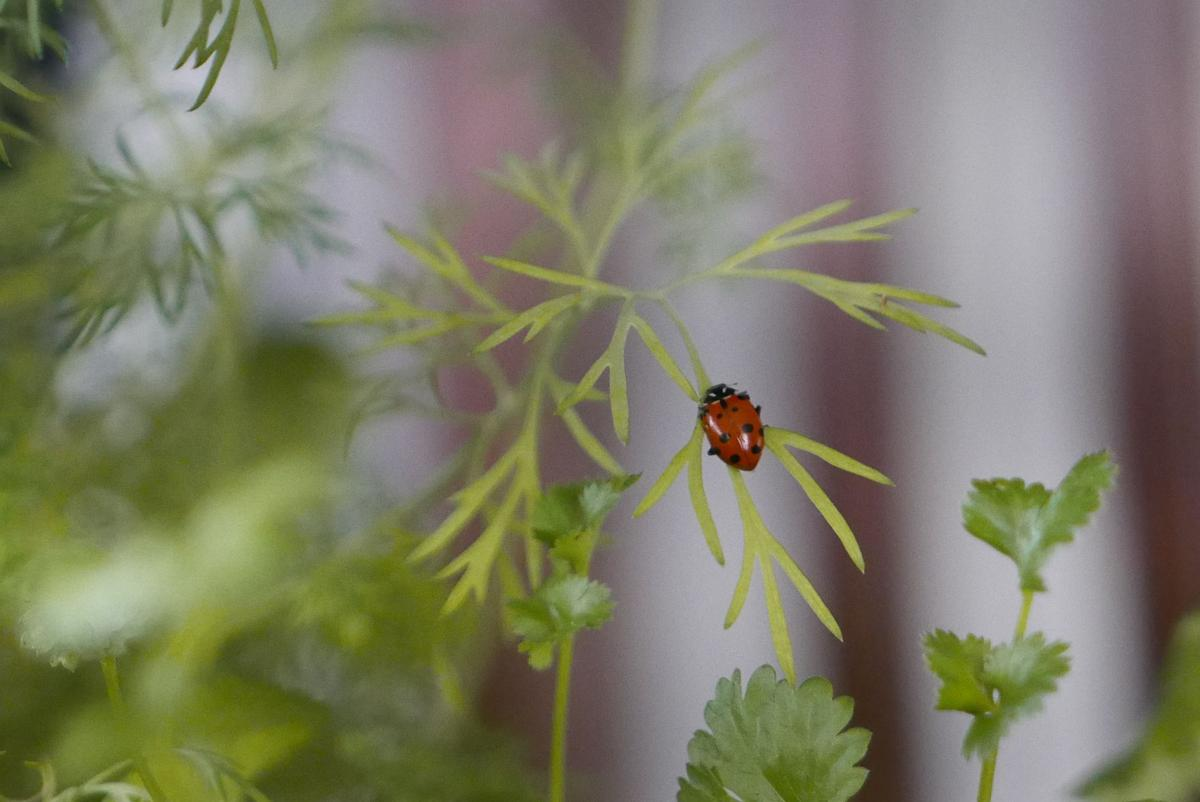 eternal bloom bouquet dill with ladybug.jpg