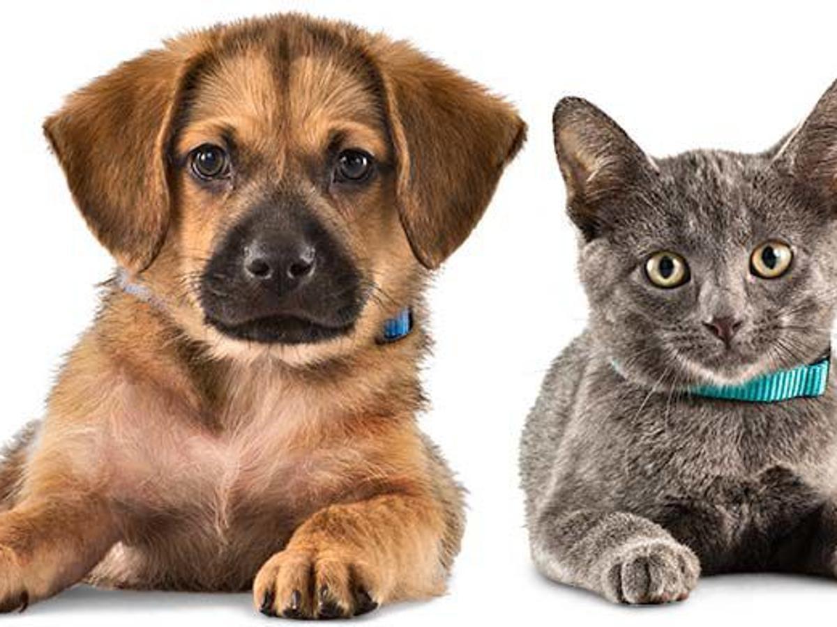 Colorado Springs Area Pet Adoption Fairs And Events Starting Aug 31 Lifestyle Gazette Com