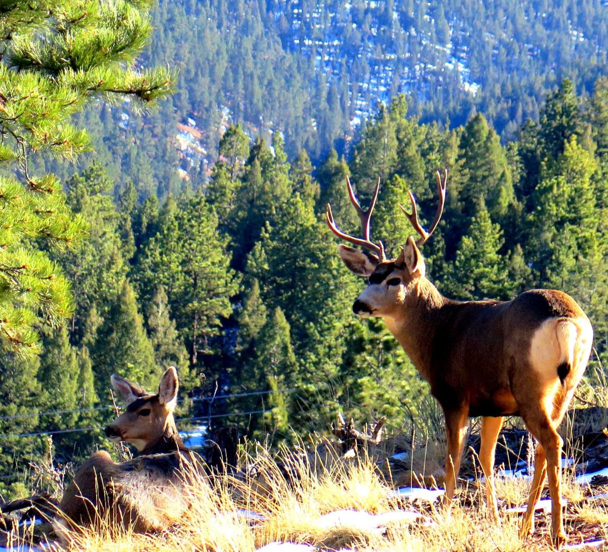 Snapshots: The breathtaking natural flora and fauna of Teller County