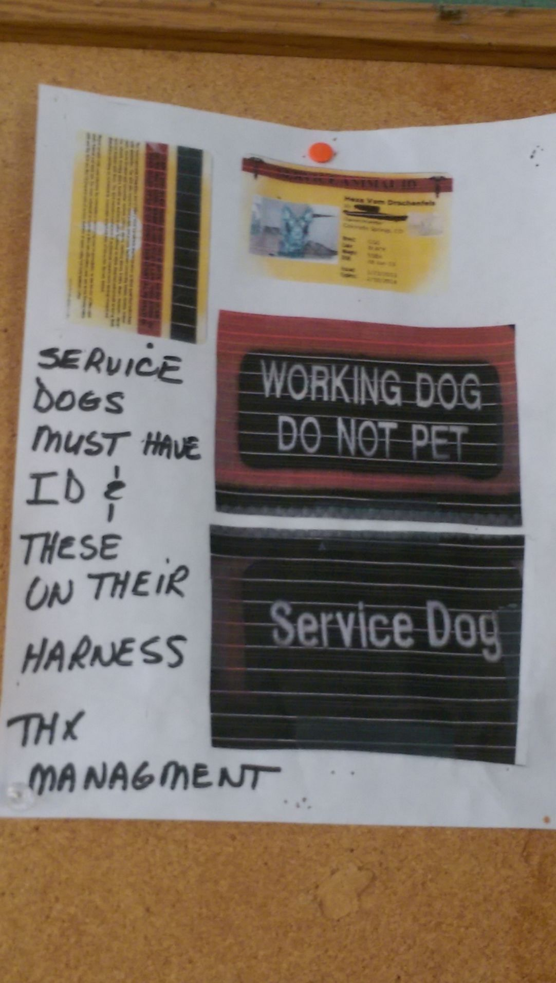 False Service Dogs On Rise As Vests Fake Ids Readily Available