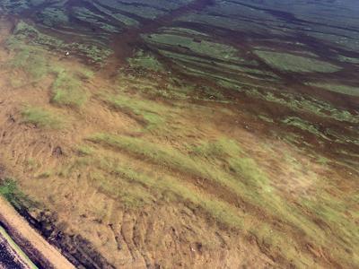 Blue-algae at Prospect Lake (copy)