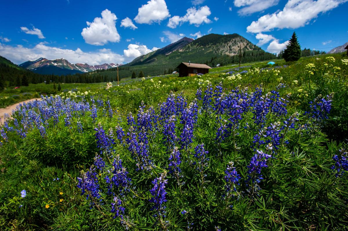 CRESTED BUTTE WILDFLOWER FESTIVAL 2017 (copy)