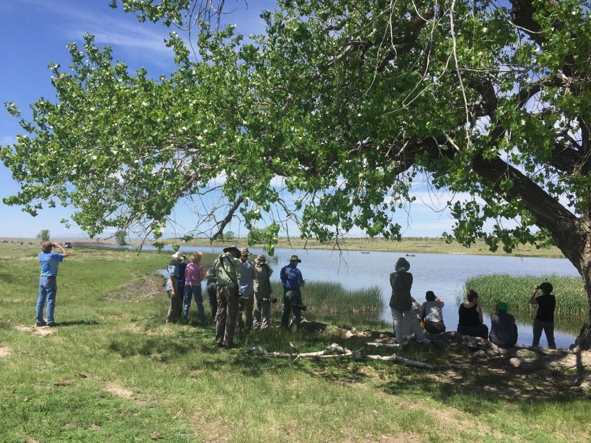 Popular Colorado Springs birding festival offers field trips, speakers, seminars