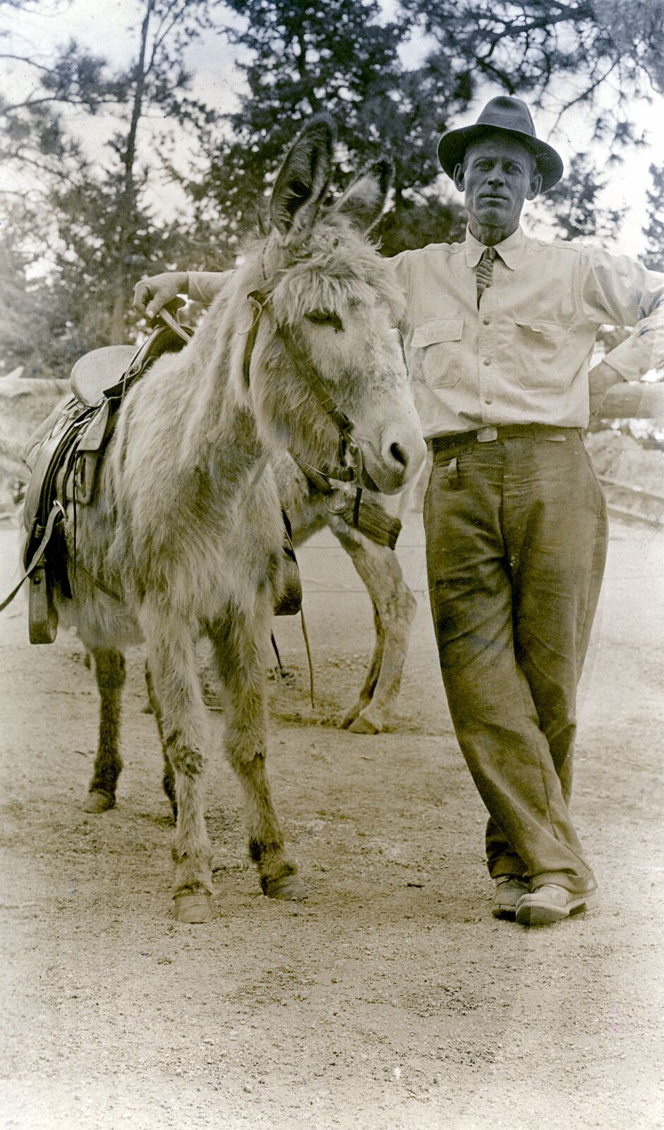 Fred Barr Standing with Mule.tif