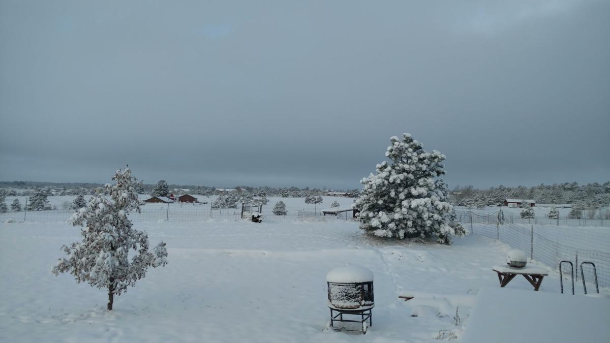 snow black forest 103118