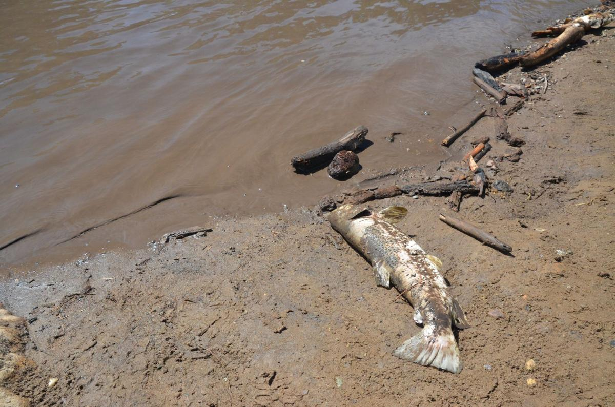 Fish kill 416 fire 2