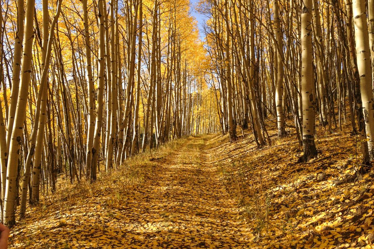 Ten scenic drives to check out Colorado's gold rush of aspens