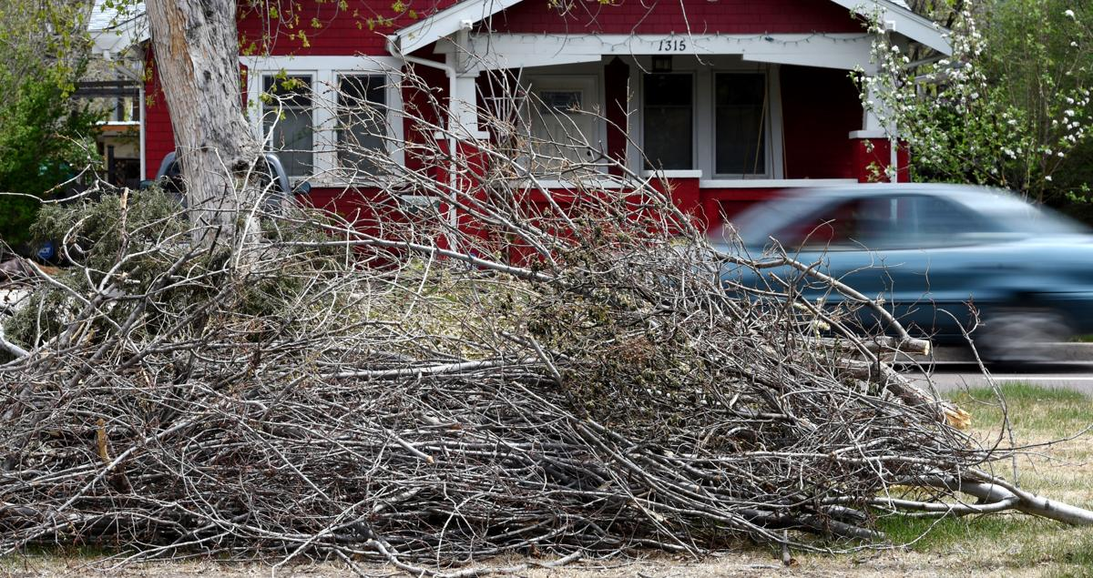 Tree limb cleanup from snowstorm taking time - as Colorado Springs ...