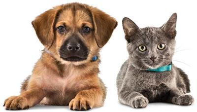 Colorado Springs Area Pet Adoption Fairs And Events Starting Jan 4 Lifestyle Gazette Com
