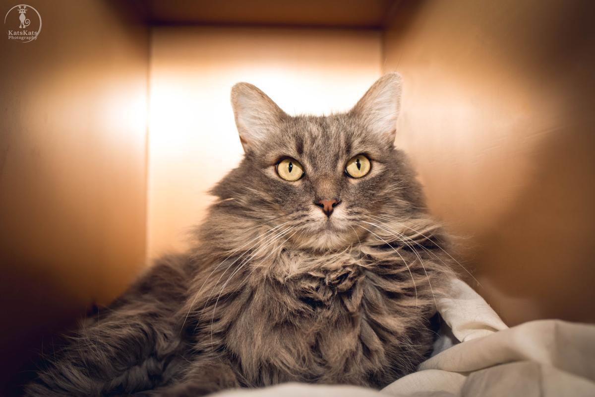 Available Pet, Kitty 1 .jpg
