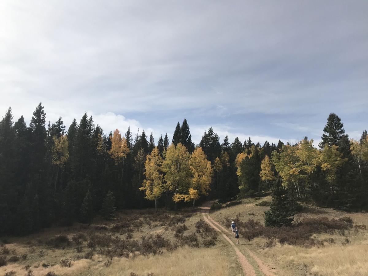 elk meadow 2.JPG