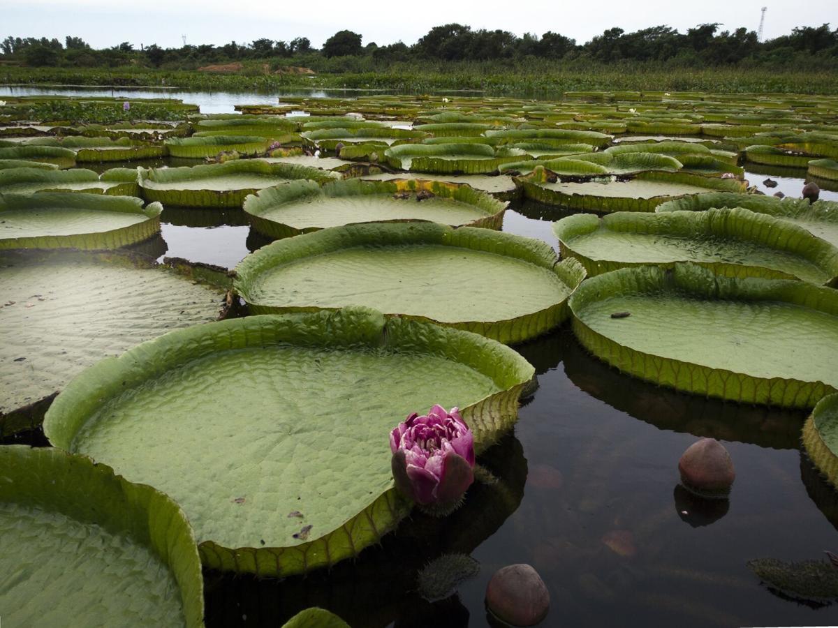 APTOPIX Paraguay Earth Day