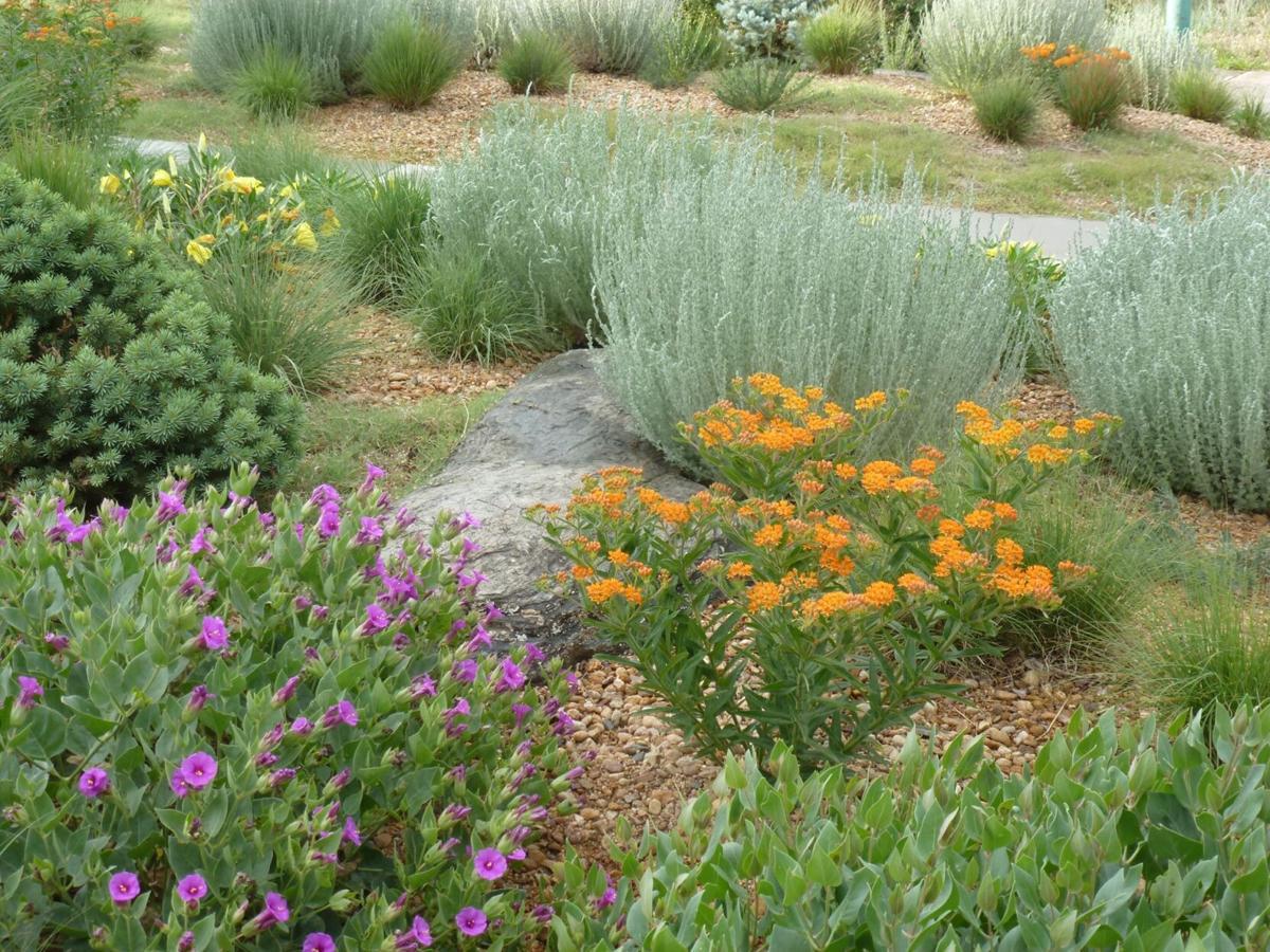 native plants pix.jpg
