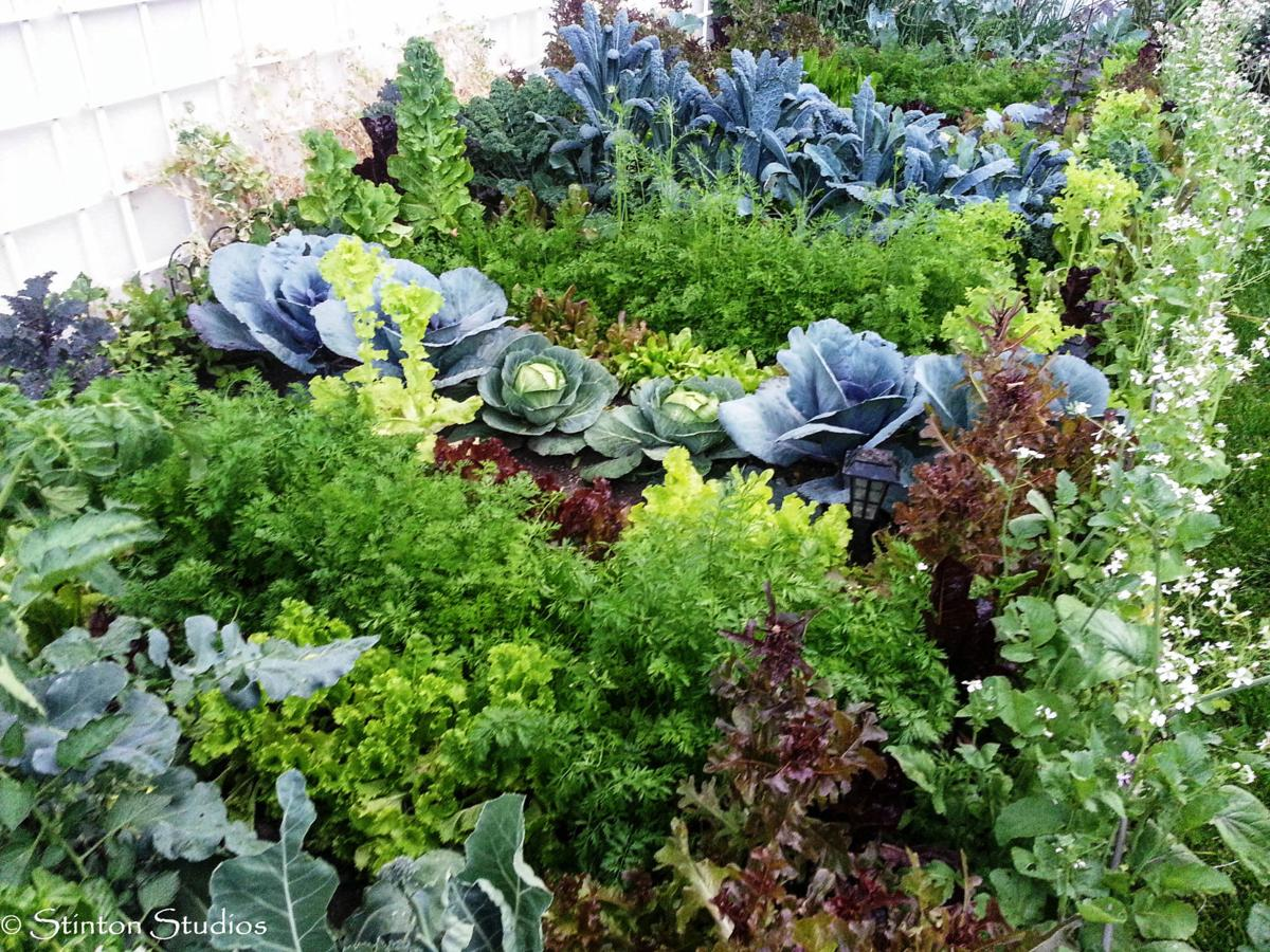 How to Start Your Own Vegetable Garden Knowing that fresh ...